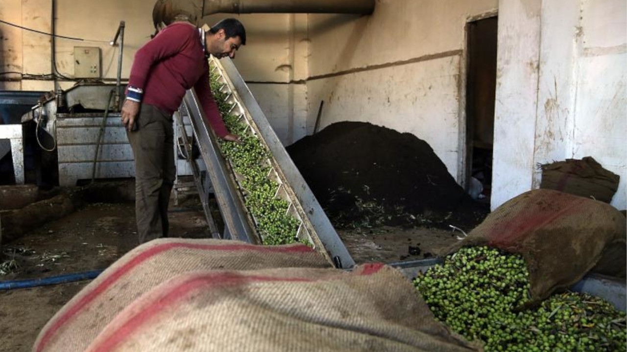 Olive oil from Syrian city of Afrin intended for export floods Turkish market