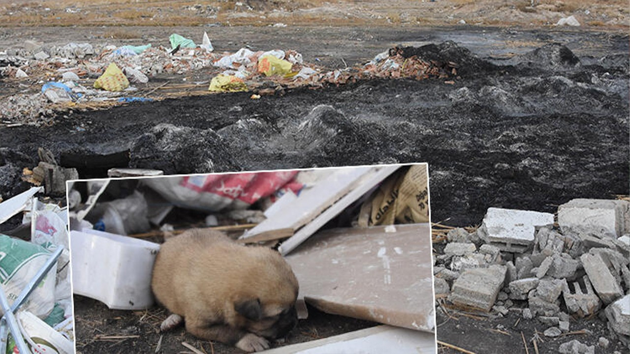 Burning of nine puppies highlights the lack of animal rights laws in Turkey