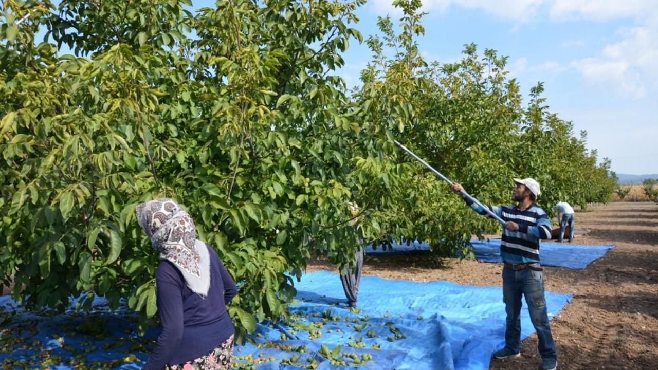 Highway construction to destroy thousands of fruit trees in Aegean Turkey