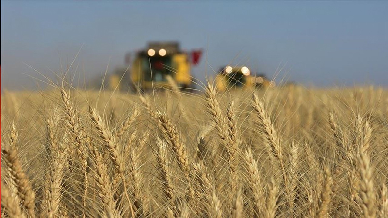 Turkey's wheat fields shrink by 27 percent, imports spike under AKP government