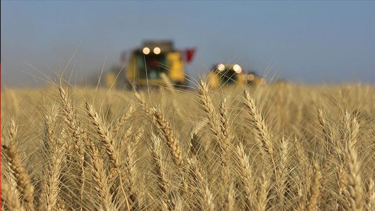 Turkey's wheat fields shrink by 27 pct, imports spike under AKP gov't