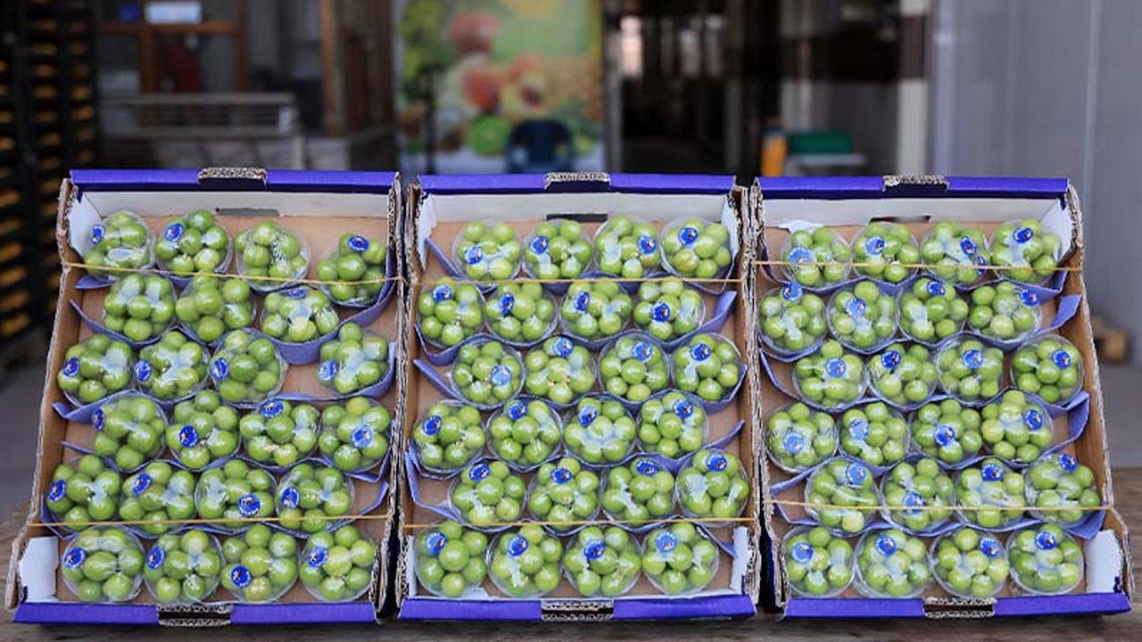 Common green plums remain pricier than a quarter gold coin in Turkey