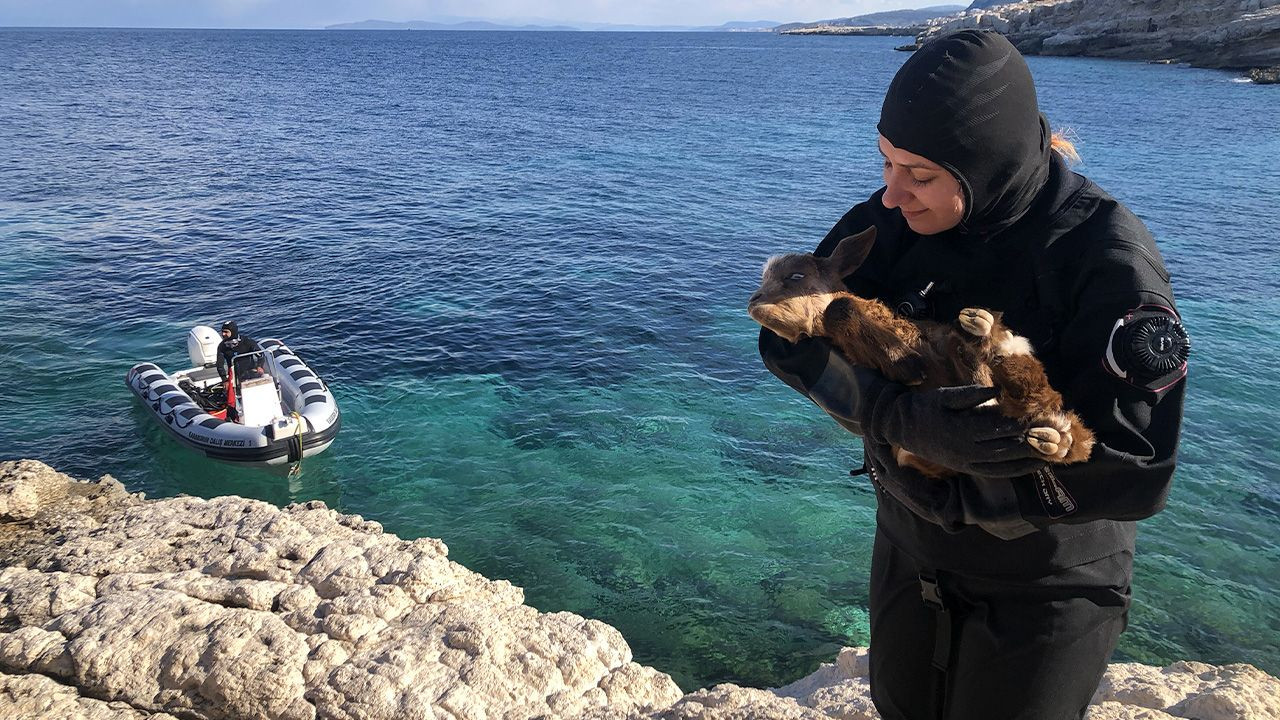 Disabled goat rescued off of Aegean island by benevolent divers - Page 1