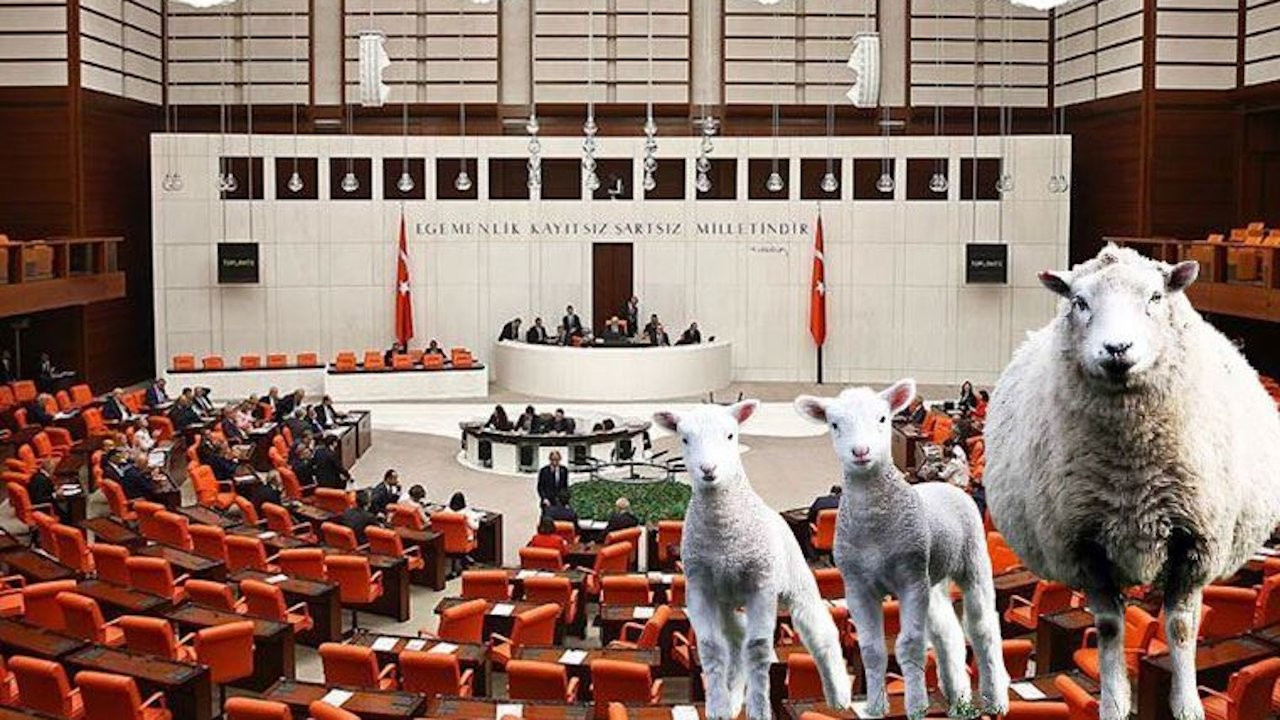 'Are they terrorists?': Turkish authorities detain 100 sheep