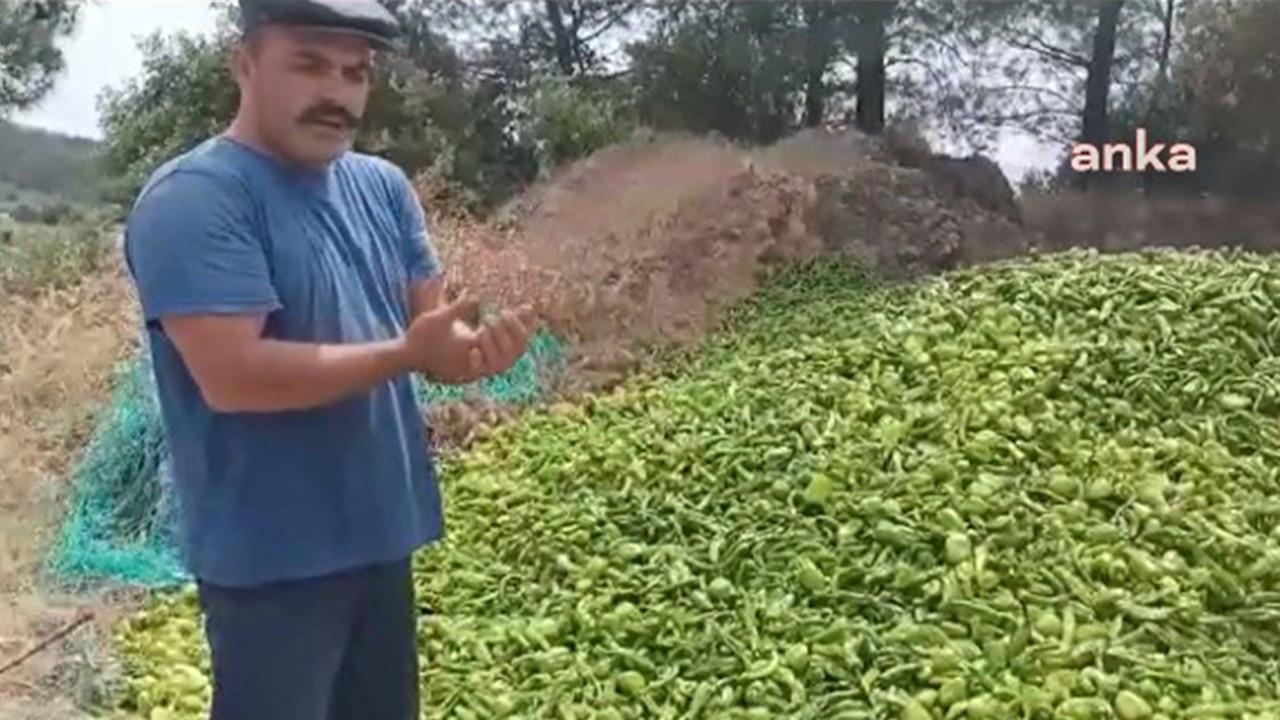 Turkish farmer dumps peppers in forest to protest financial crisis