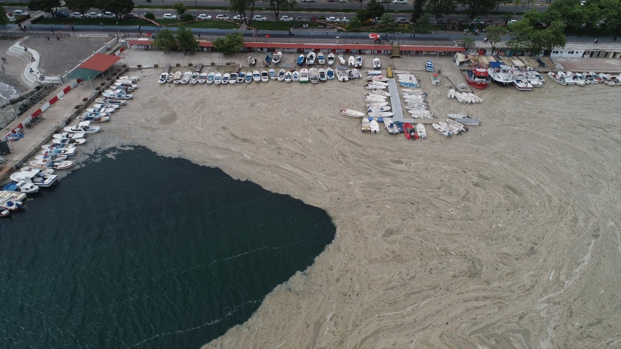 The sea is dying: Experts alarmed as 'sea snot' covers surface, coasts