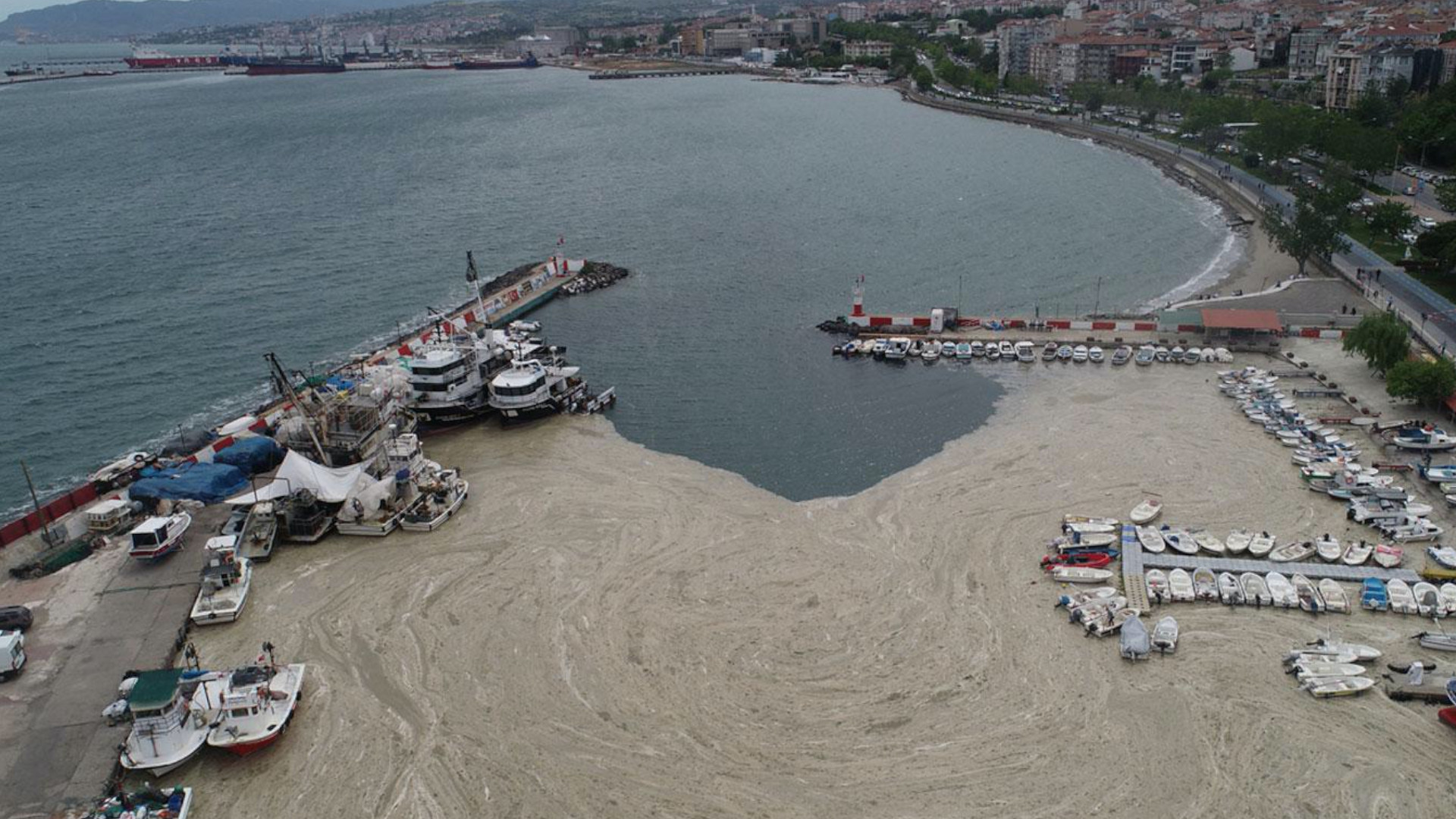 Turkey's seas are rotten, so is its political economy