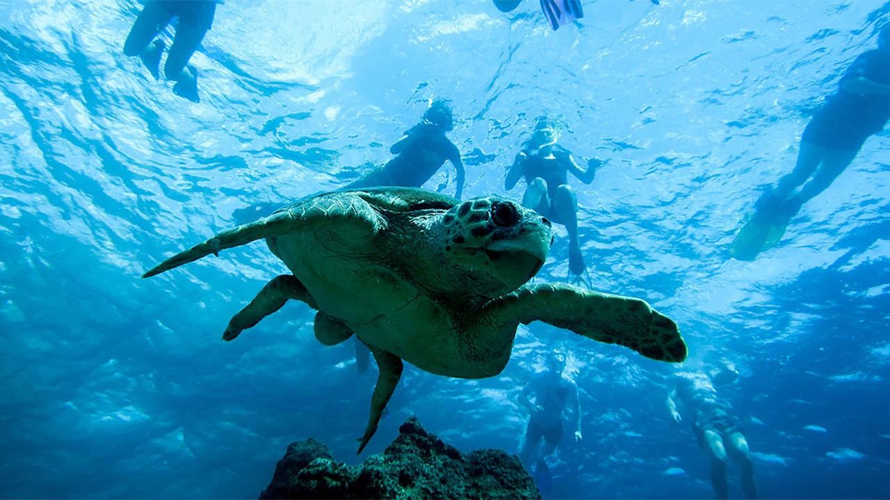 Mediterranean warming, getting saltier faster than global average: WWF