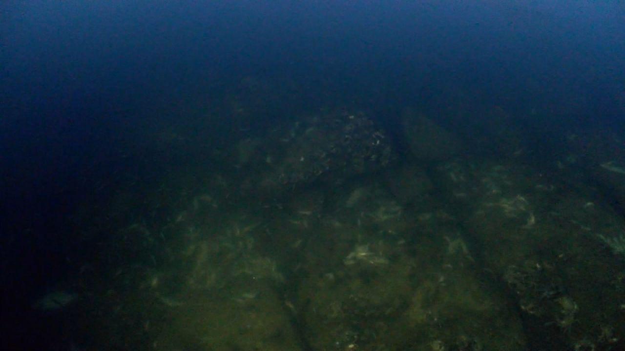 Hundreds of fish, crab wash ashore in Istanbul's Küçükçekmece Lake - Page 4