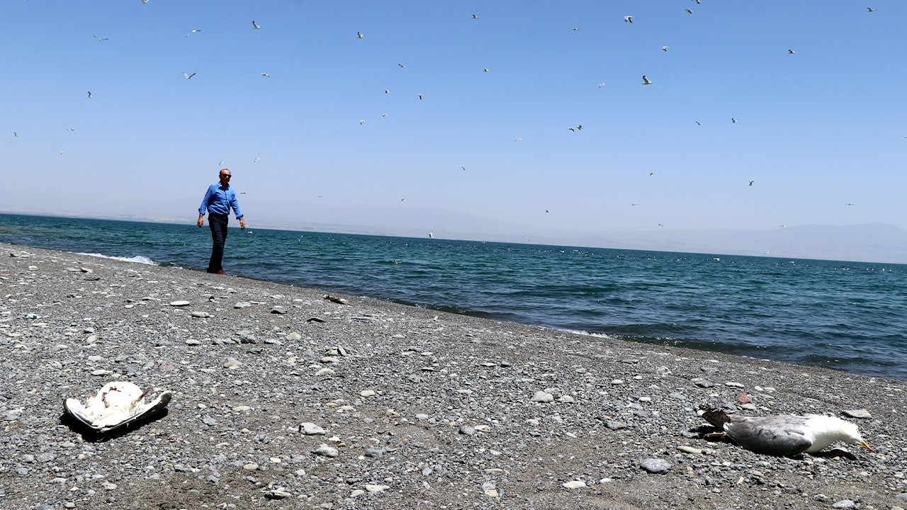 Famine, stress behind mass seagull deaths around Turkey's Lake Van