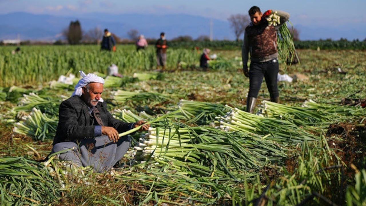 Turkish farmers' debts 'increased 72-fold in last 18 years under AKP reign'