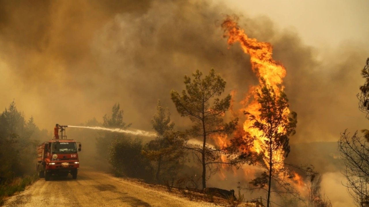All wildfires in Turkey taken under control: Forestry Minister