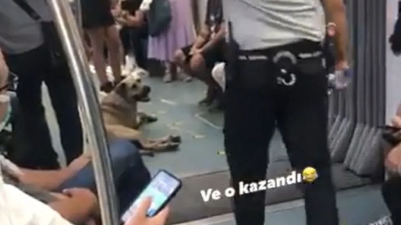 Stray dog touring Istanbul on public transportation becomes viral - Page 3