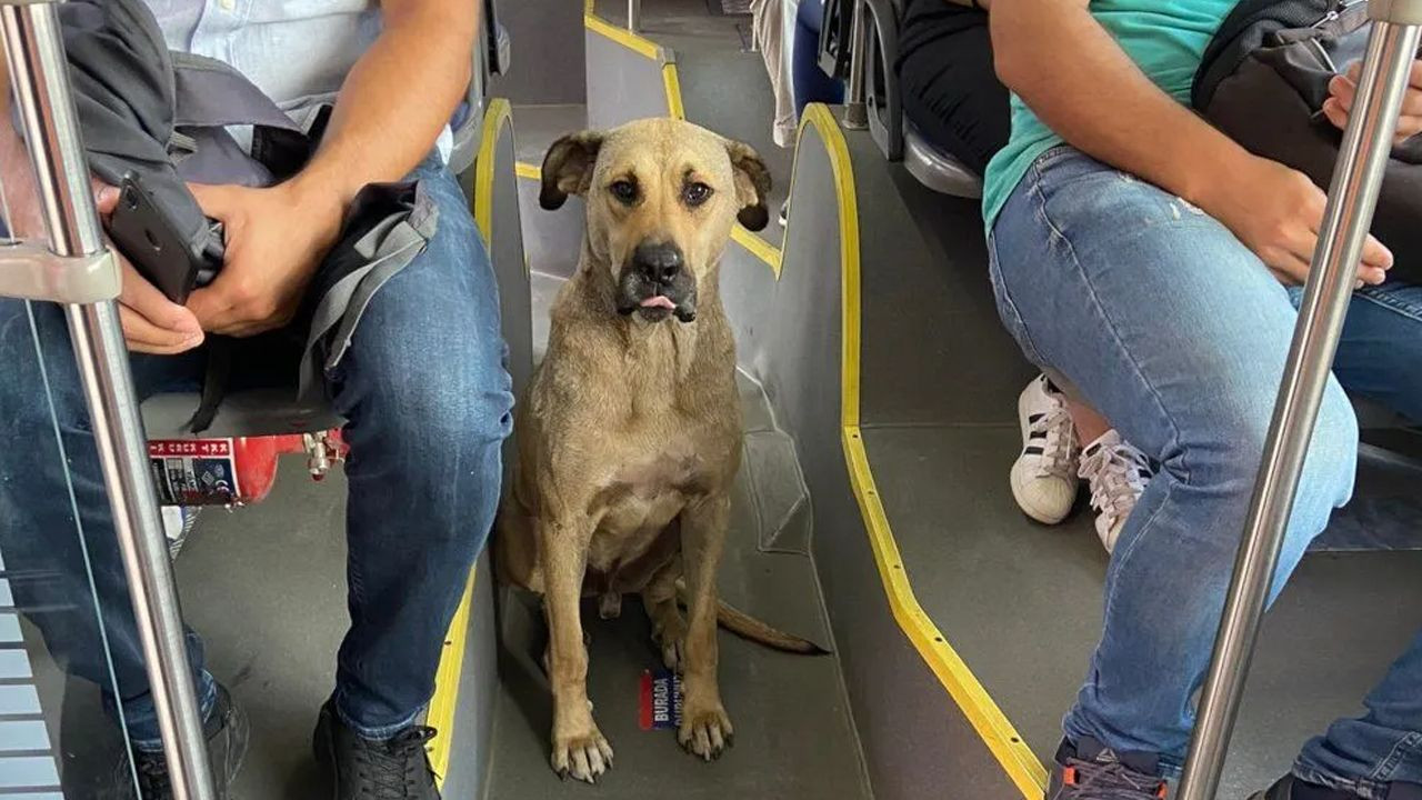 Stray dog touring Istanbul on public transportation becomes viral - Page 4