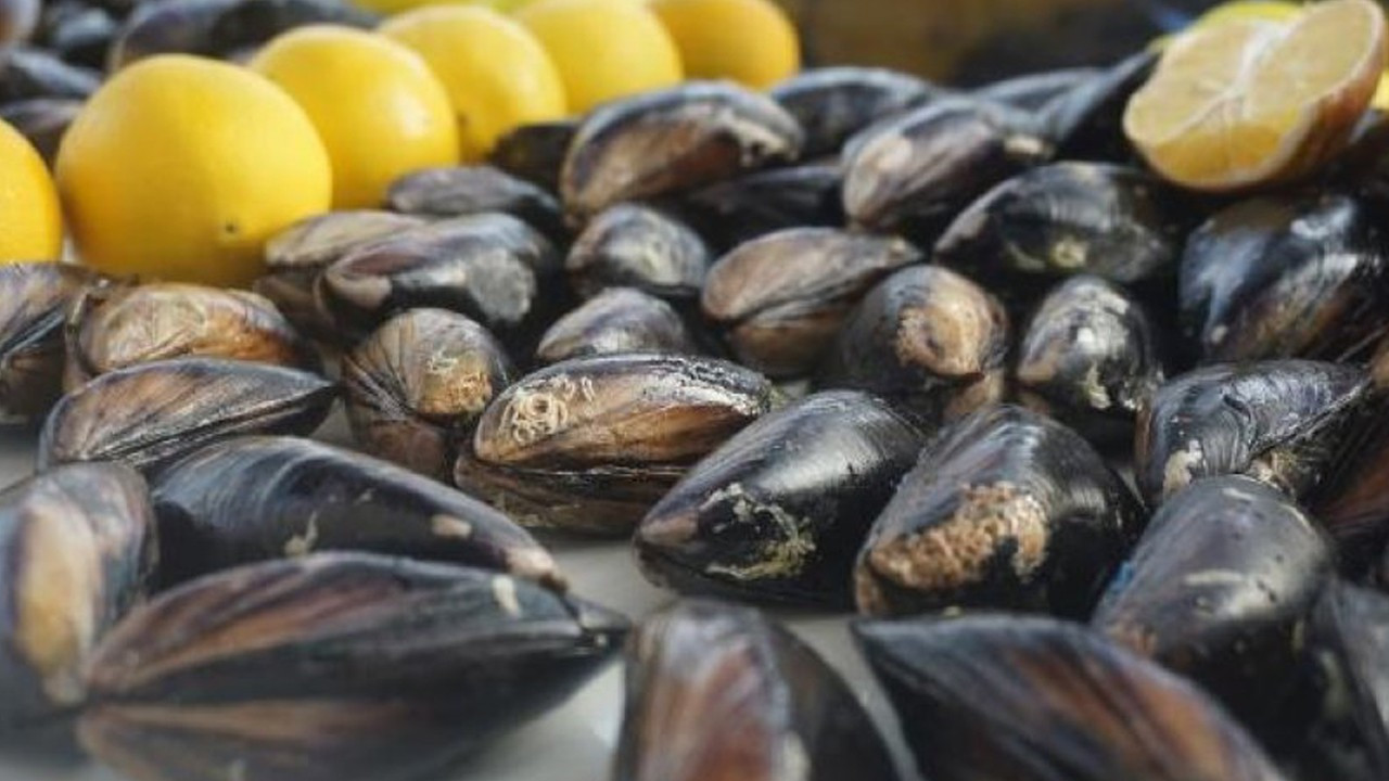 Eating certain seafood is haram, Turkey's top religious body says in fatwa