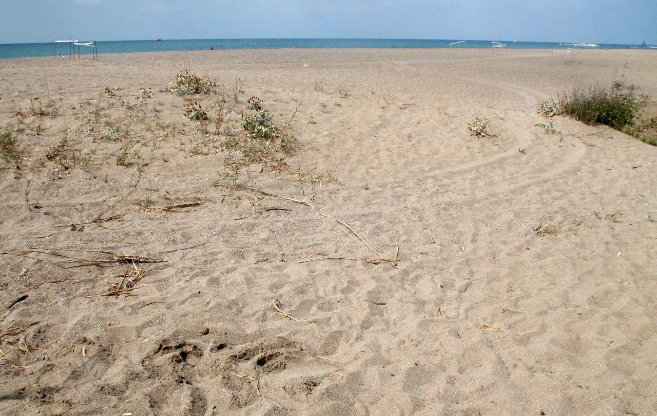Two men on ATVs kill caretta caretta babies on Antalya beach - Page 1