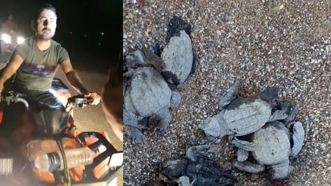 Two men on ATVs kill caretta caretta babies on Antalya beach