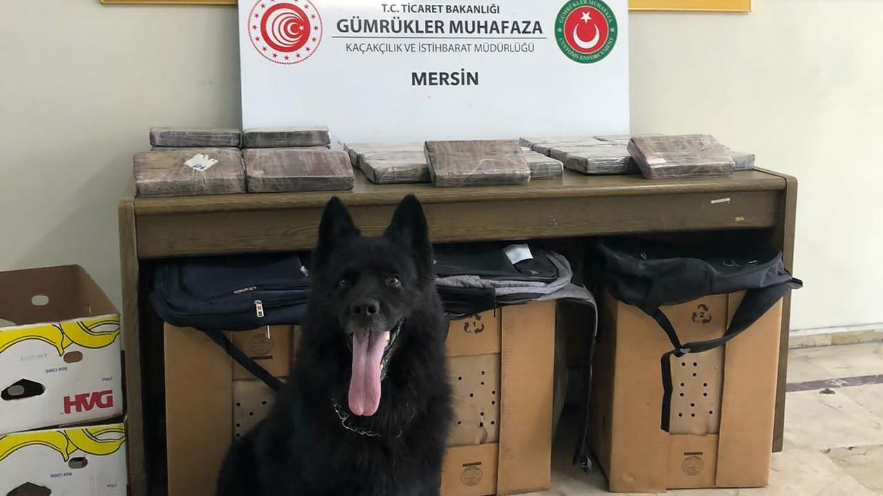 30 kilos of cocaine seized among banana crates in Mersin port