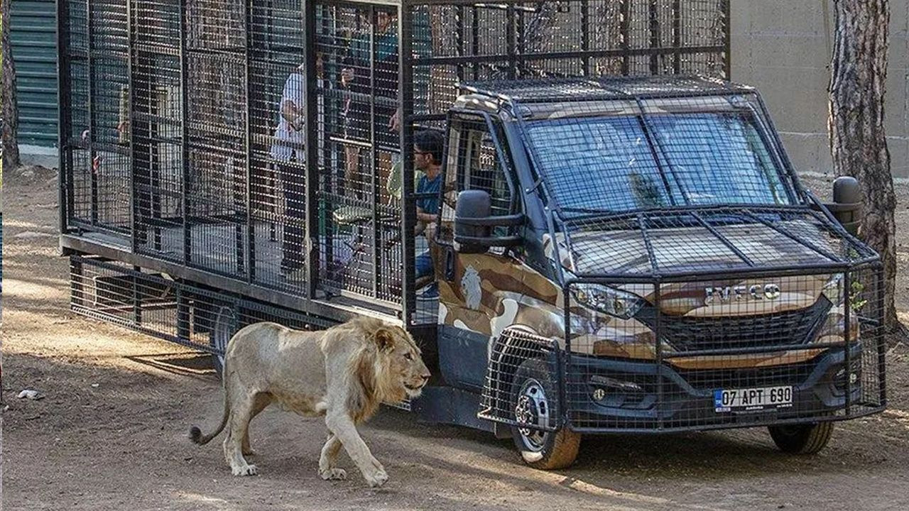 Animal rights defenders enraged over lion safari in southern Turkey - Page 3