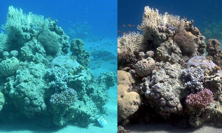 Turkish oceanographer develops algorithm that 'erases' water from underwater photos