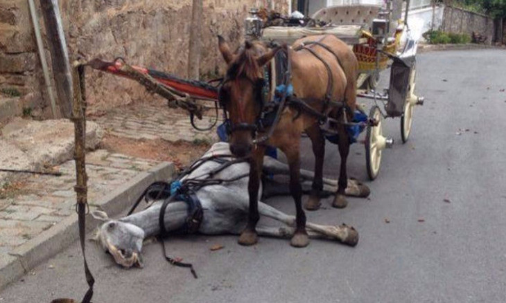 Controversial horse-pulled carriages banned on Istanbul's Princes' Islands