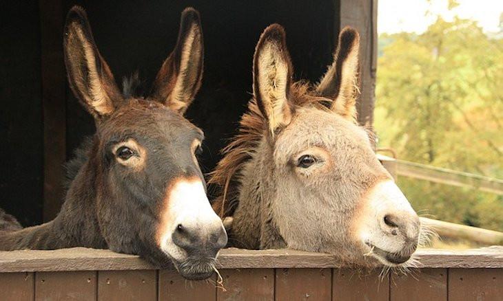 Turkey to import horse, donkey meat from Sudan
