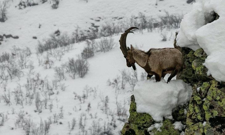 Journalist films short documentary on Dersim mountain goats cherished as holy by locals
