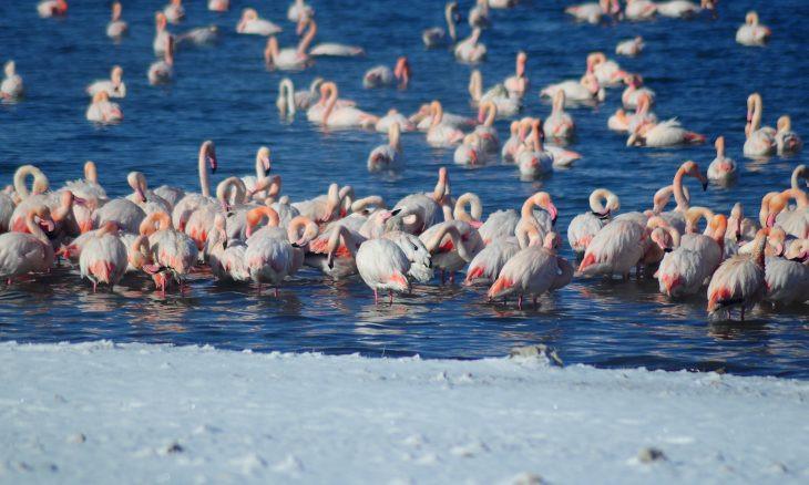12 flamingos found frozen to death in central Anatolia