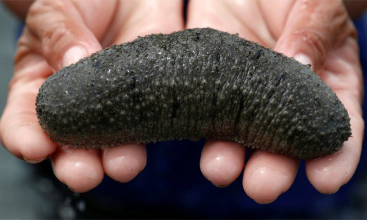 Half a ton of sea cucumbers found alive in western Turkey, 33 hunters fined