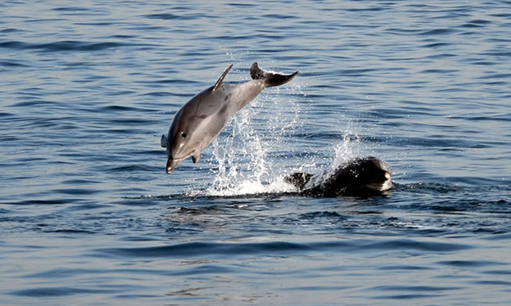 Dolphins return to Istanbul coast when abandoned due to COVID-19