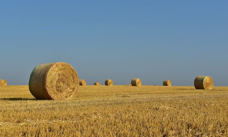 Agricultural land to gain in value in Turkey once coronavirus outbreak ends