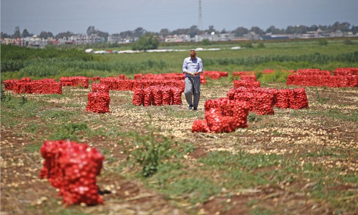 Turkey's onion farmers on the verge of bankruptcy due to low domestic demand, export restrictions