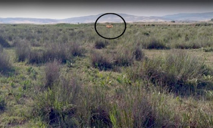 Officials search for lion in northern Turkey upon shepherd's report