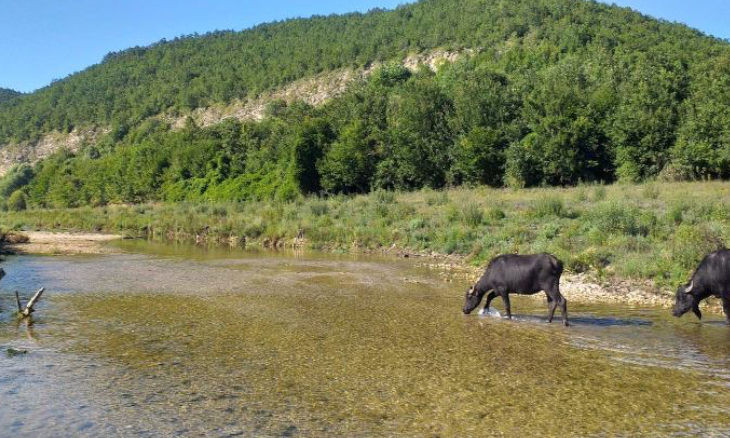 Two reservoirs crucial to Istanbul's water supply under than 10 percent of capacity
