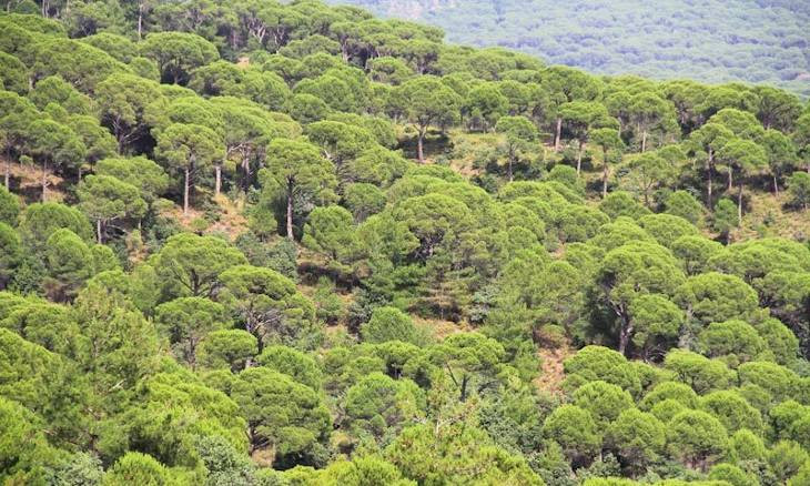 Expansion of stone quarry threatens livelihood of lush highlands in İzmir