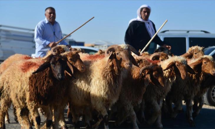 Turkey's animal breeders struggle during Eid al-Adha amid rising costs