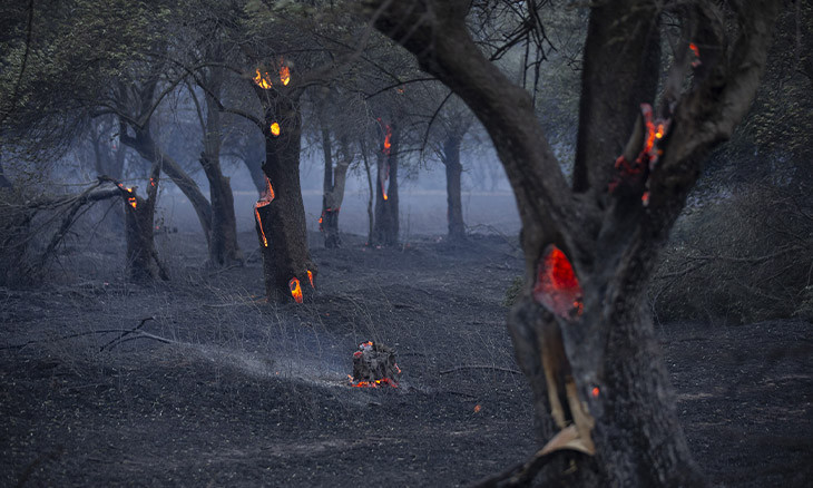 Fire scorches through hundreds of hectares in northwest Turkey