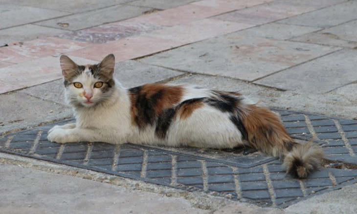 Turkish man fined for assaulting street cat
