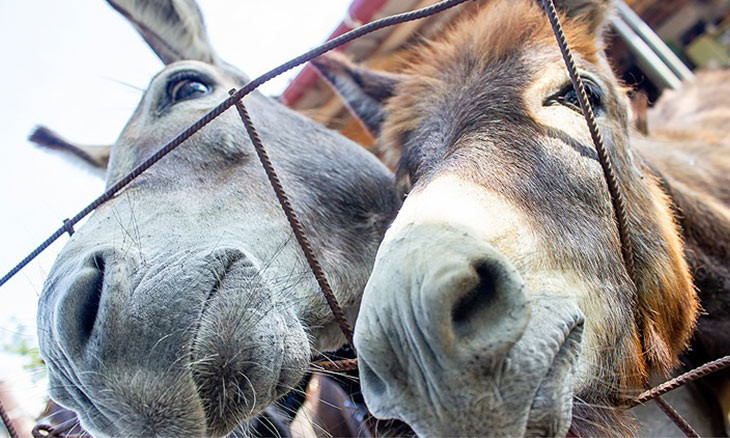 Turkey's donkey population decreases by two thirds in 18 years under AKP gov't
