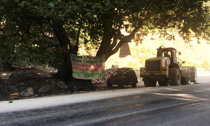 Environmentalists defend century-old trees against road expansion in Antalya