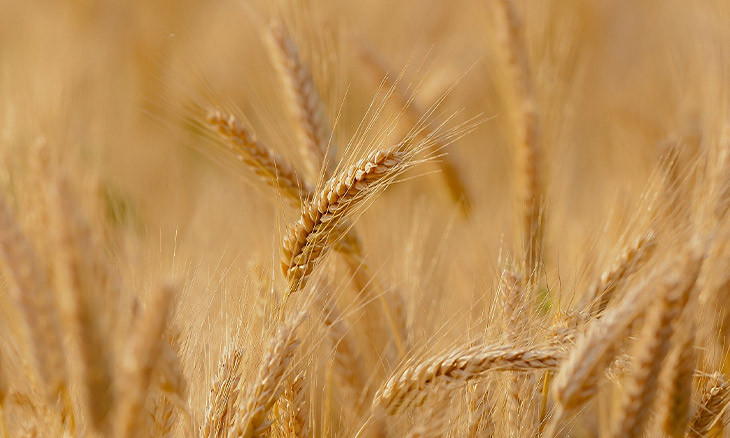 Turkey to import grains to prevent price hike amid low production
