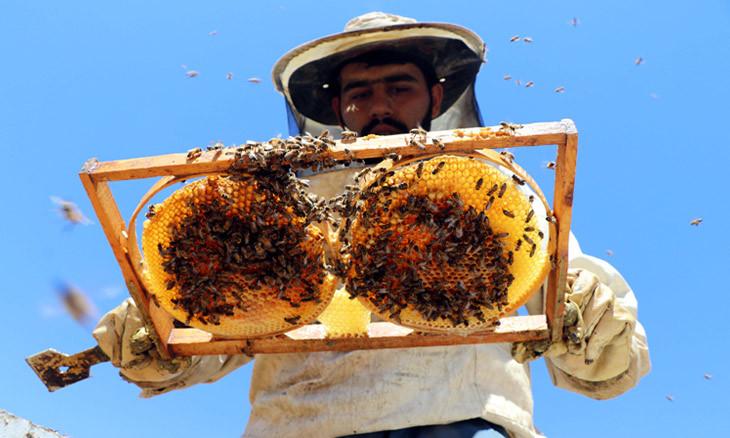 Dangerous levels of metals revealed in eastern Turkey honey