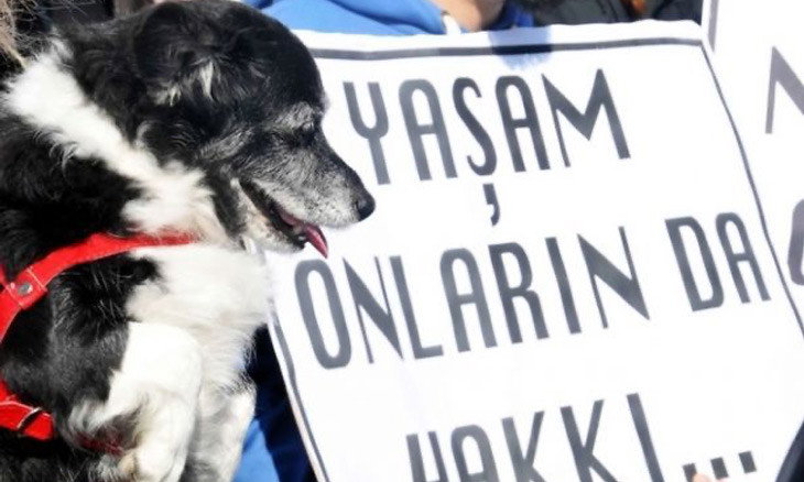 Istanbul man released after killing, stabbing neighbor's dogs