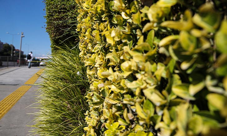 Istanbul Municipality settles vertical garden brawl via offering to use ivy as compromise