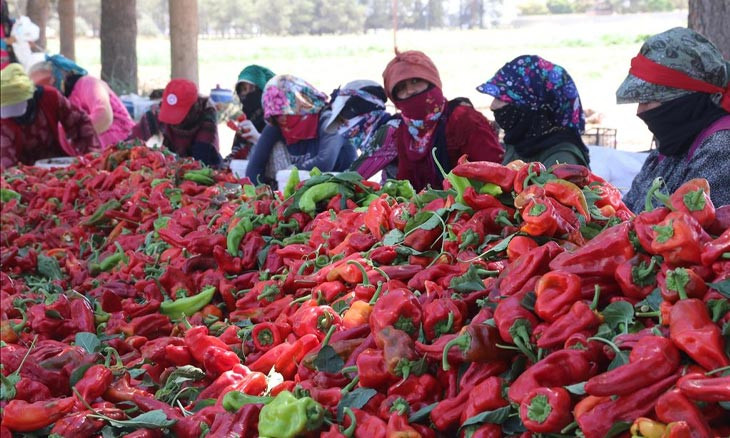 Official in Urfa warns that hot pepper doesn't protect from COVID-19