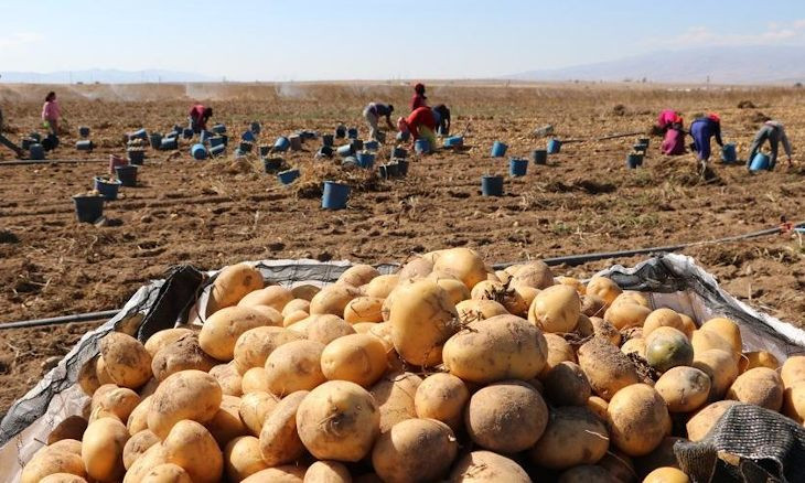 Beleaguered Turkish potato producers: AKP has drained our batteries