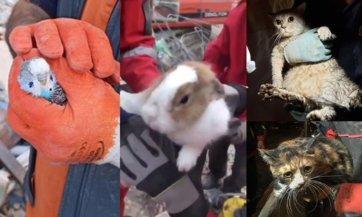 Turkey's rescue workers, society demonstrate love for animals following İzmir quake